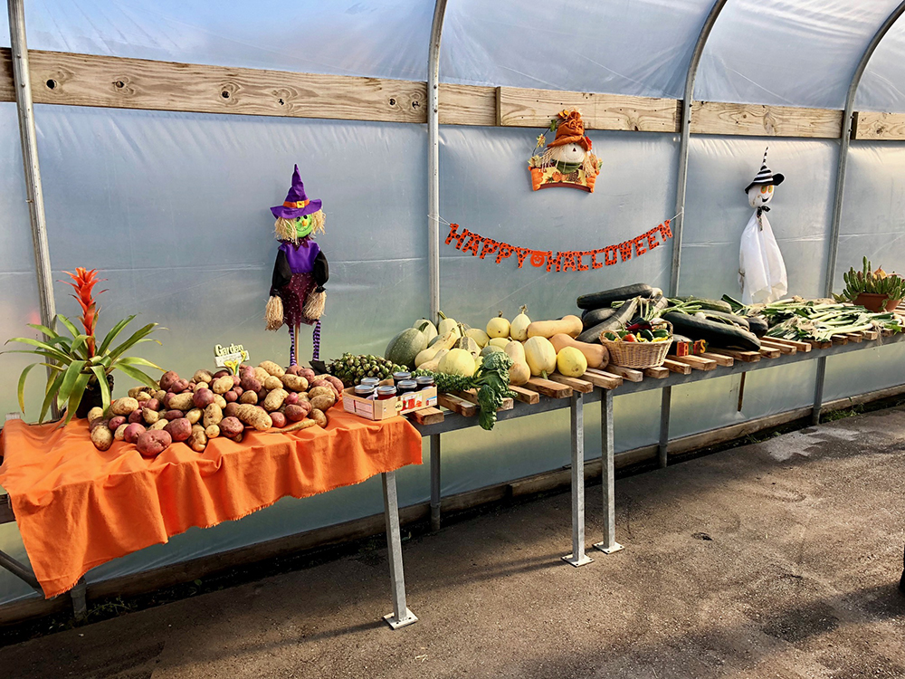 """Century greenhouse decorated with scarecrows, pumpkins, and a """"Happy Halloween"""" sign, along with a long table piled with various vegetables."""