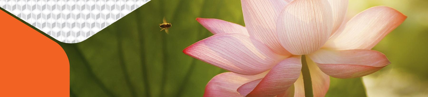 Photo of bee flying toward a flower